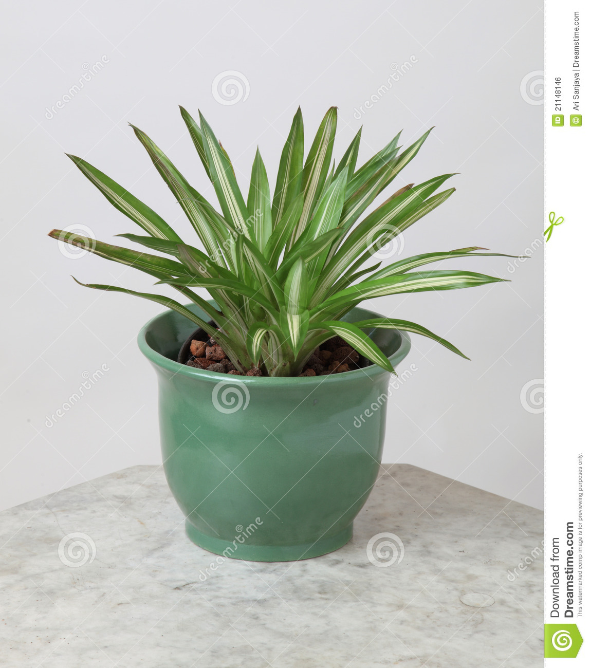 Plantas decorativas foto de stock imagem de jardinar for 5 plantas decorativas