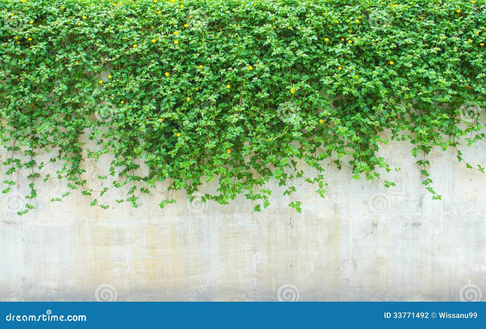 Plantas decorativas na parede fotografia de stock for Plantas decorativas hidroponicas