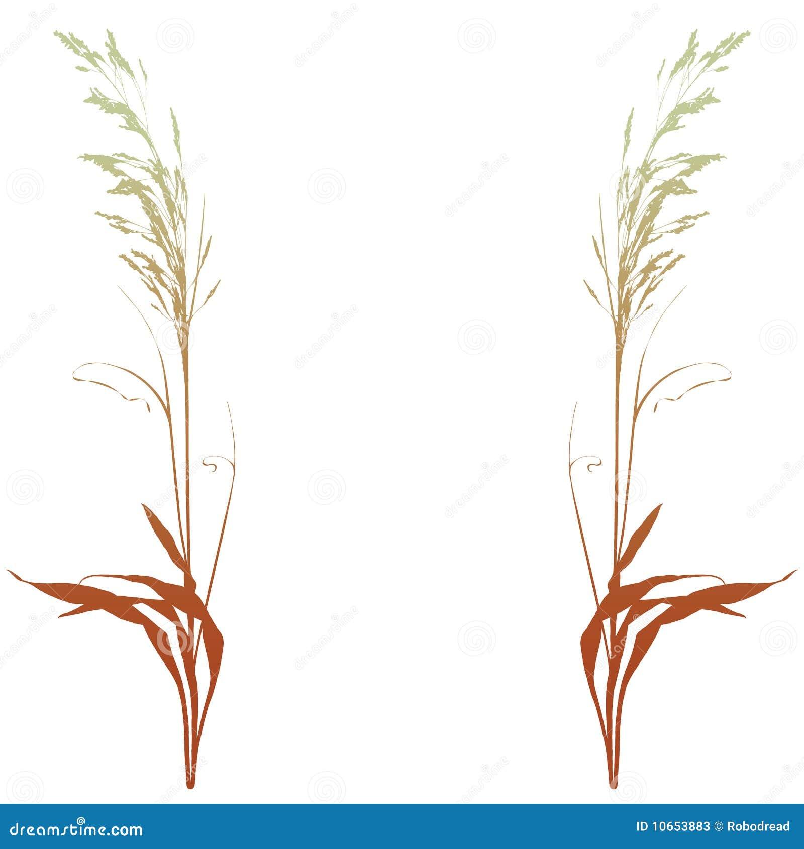 Plantas decorativas vetor fotos de stock imagem 10653883 for 5 plantas decorativas