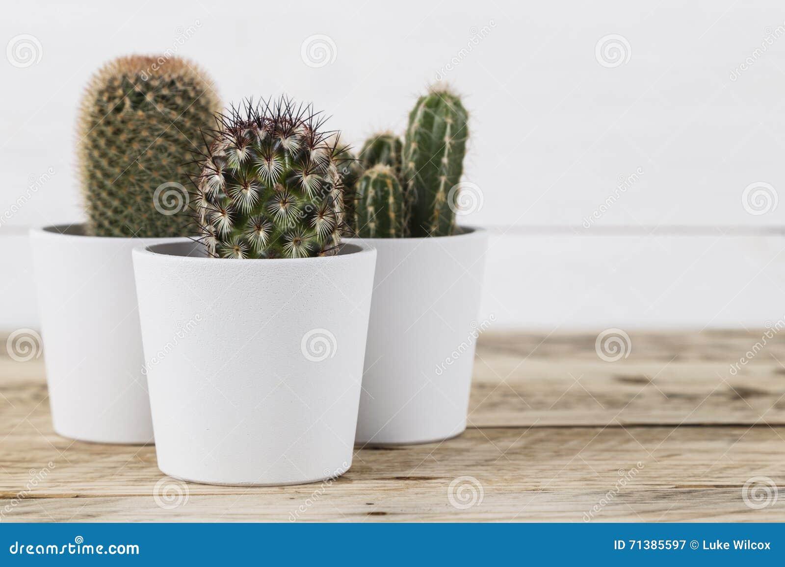 Plantas del cactus en potes