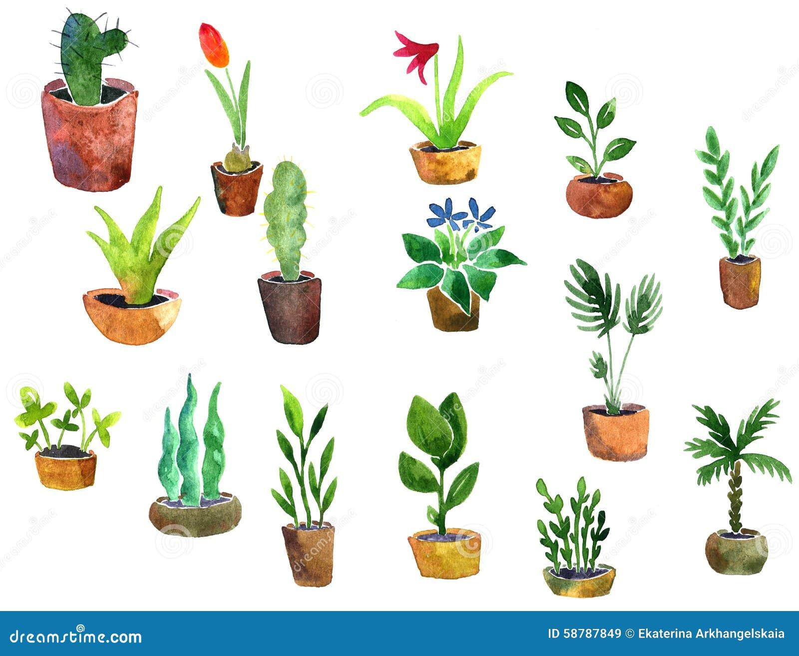 Plantas del hogar del dibujo de la acuarela stock de for Diferentes plantas ornamentales
