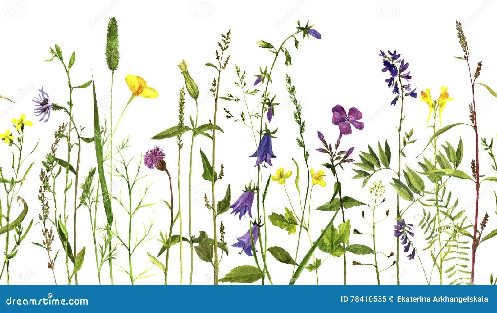 Plantas do desenho da aquarela ilustra o stock imagem for Plantas para dibujar