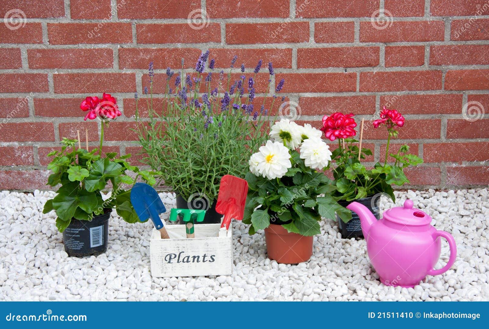 jardim flores e plantas:Plantas E Flores De Jardim Do Verão Foto de Stock – Imagem: 21511410