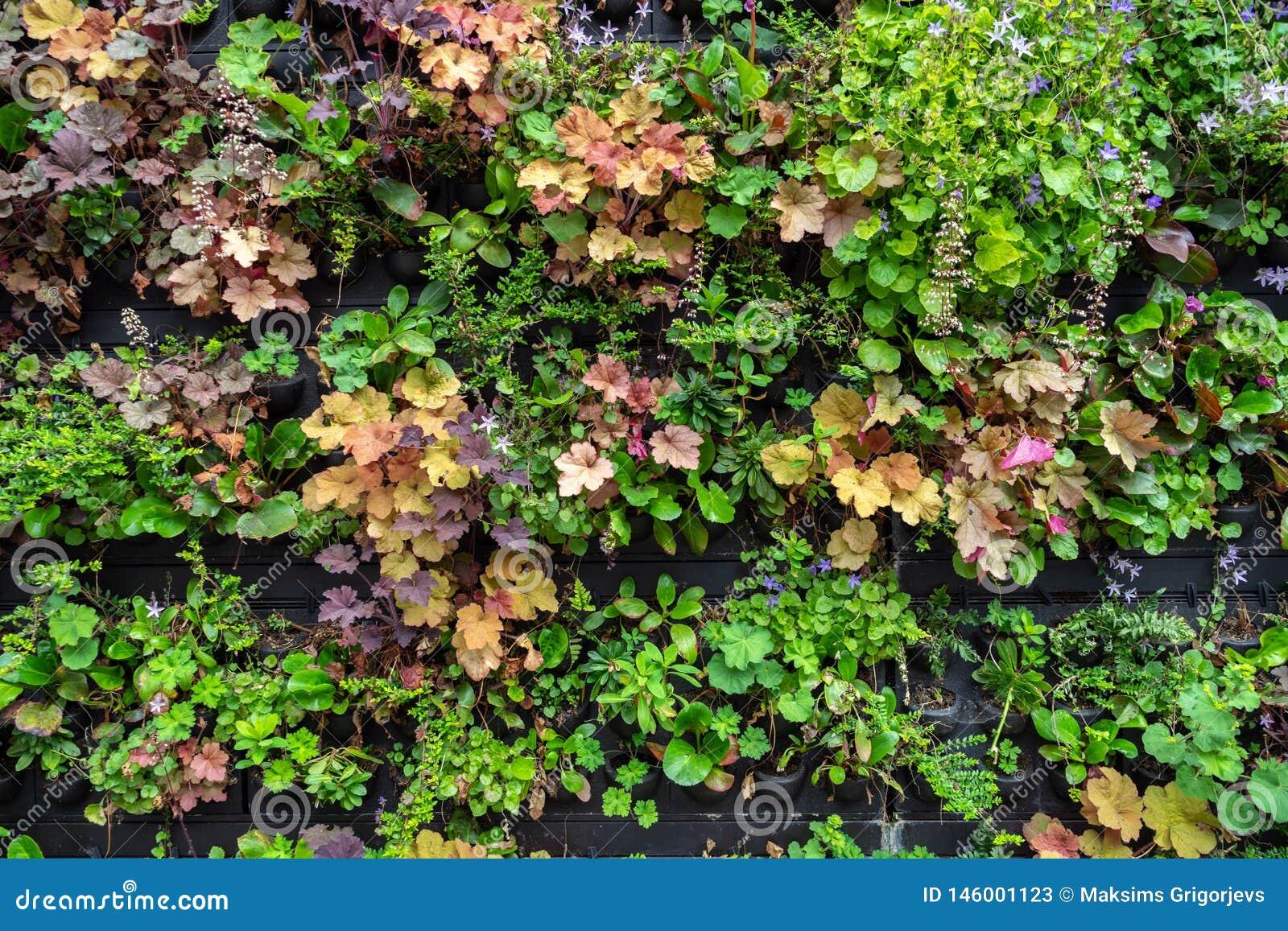 Plantas e flores em uns potenciômetros para a venda no centro de jardim ou no berçário da planta