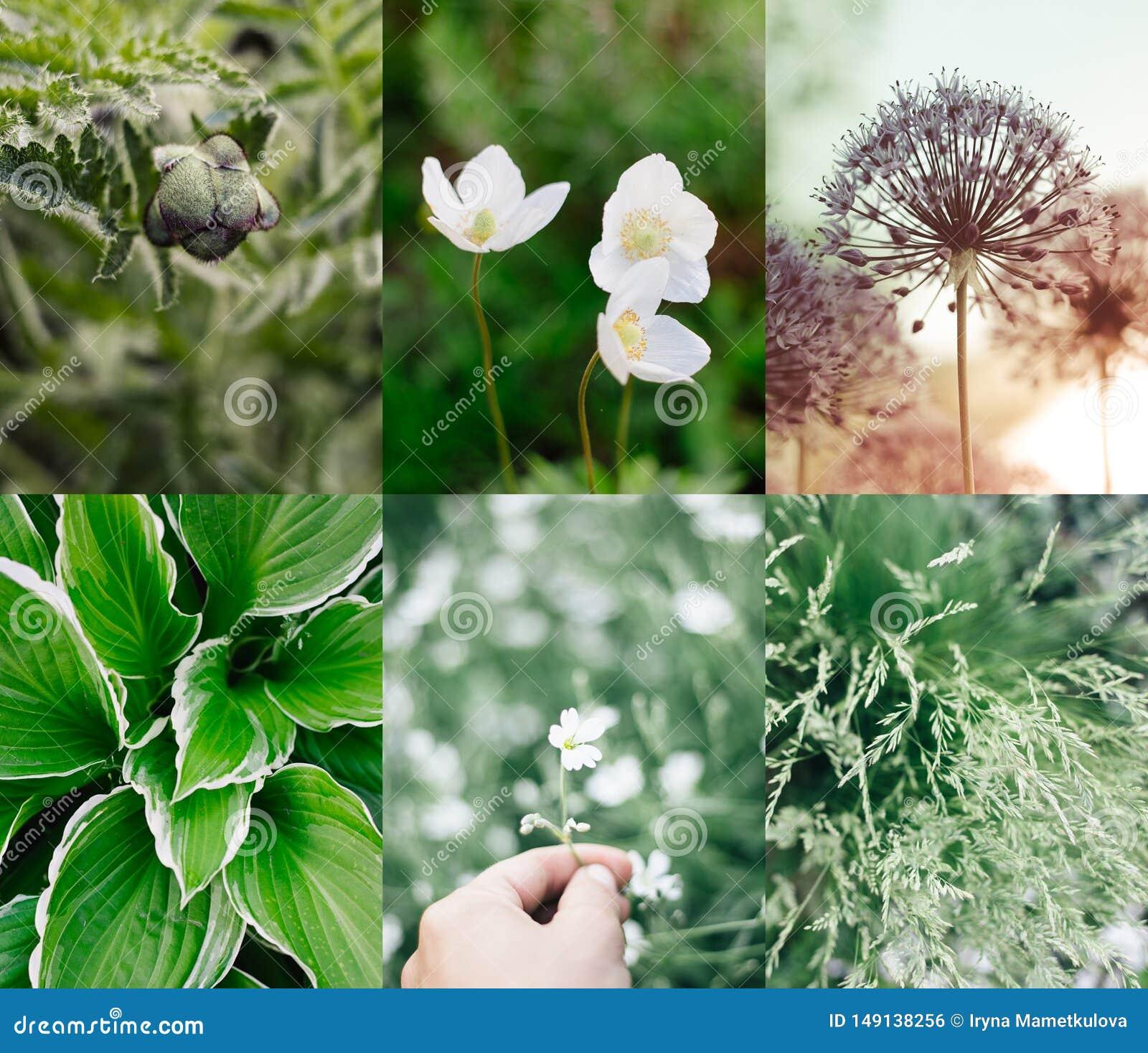 Plantas e flores verdes da colagem do ver?o