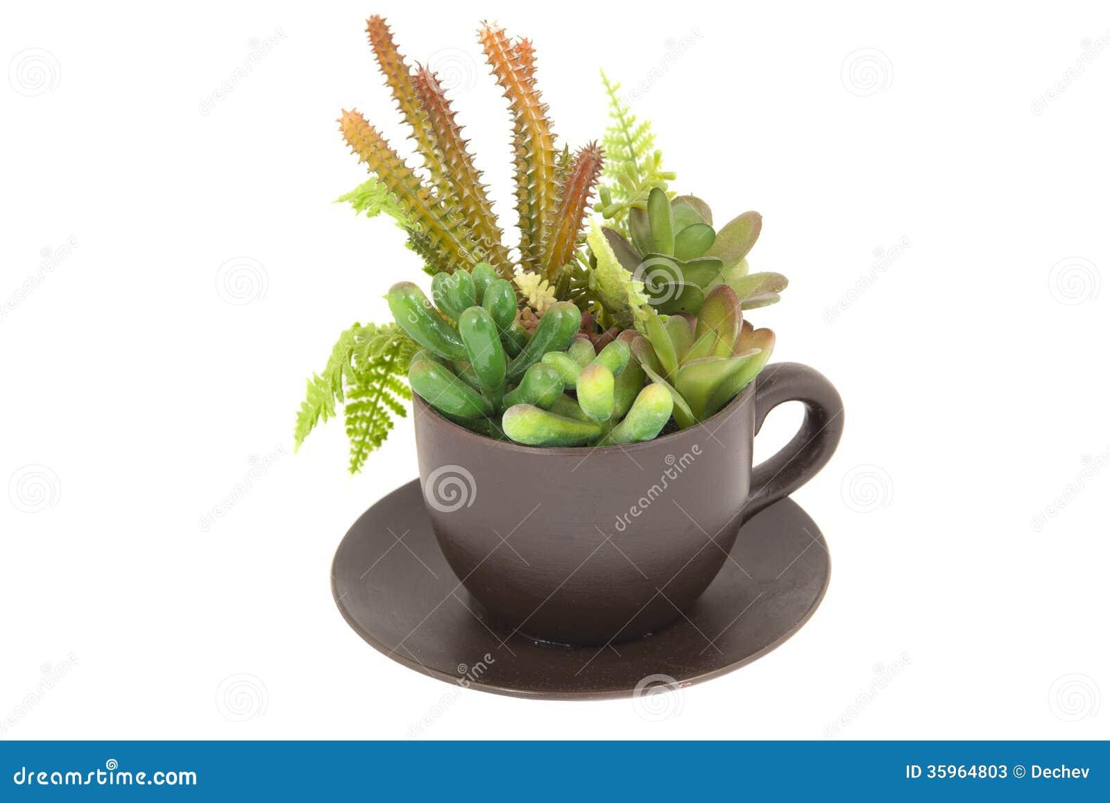 Plantas en una taza (concepto de la primavera)