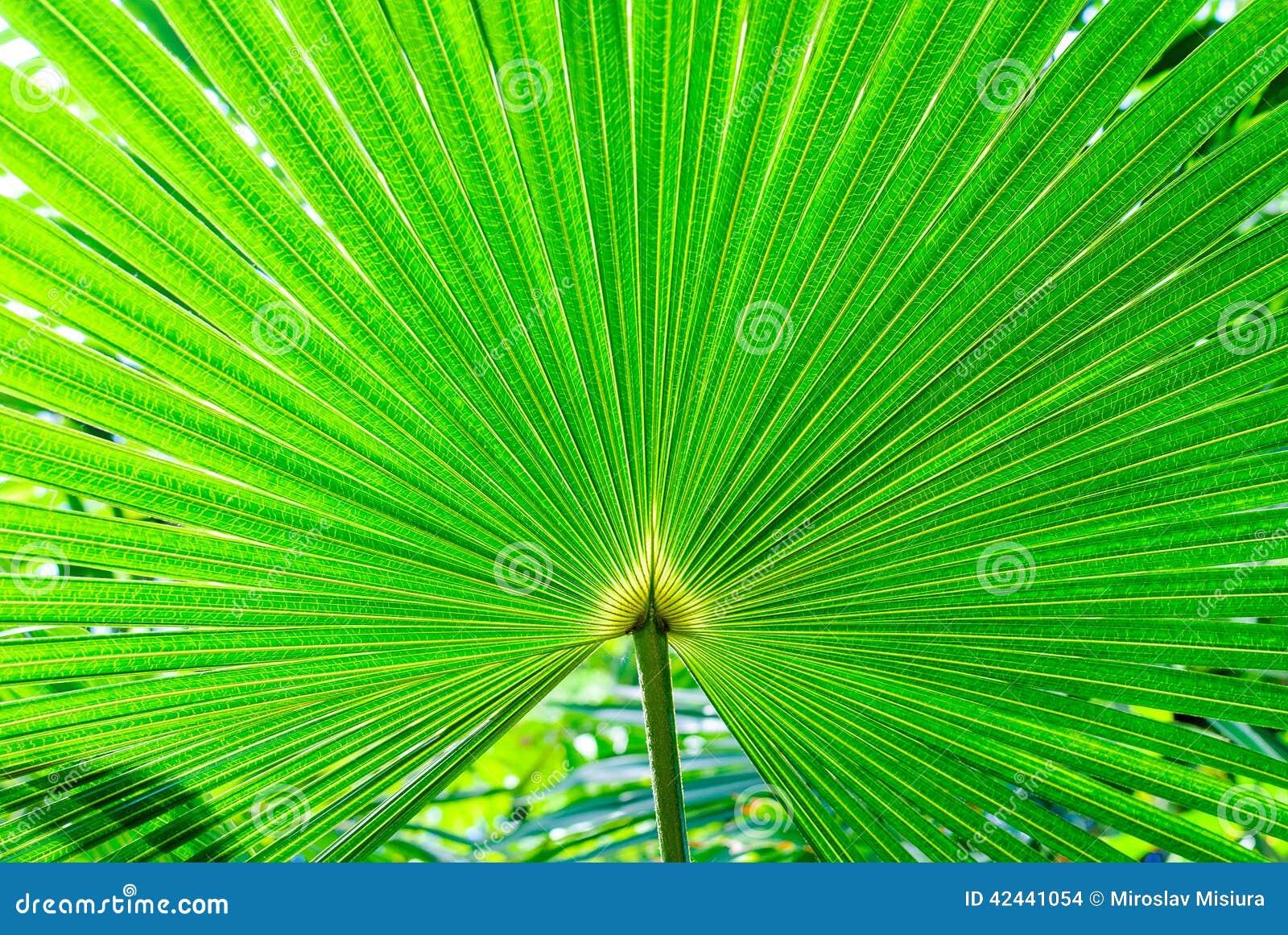 Plantas exóticas