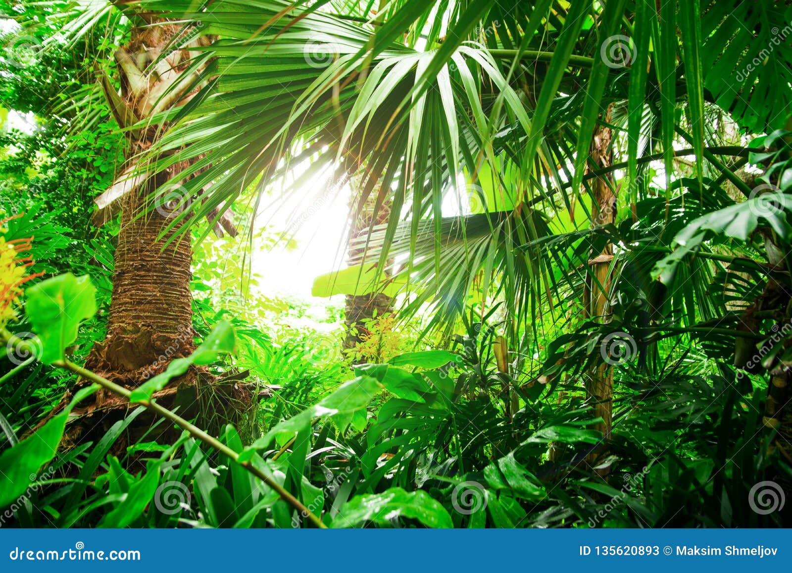 Plantas Exóticas Bonitas Da Selva Folhas Do Verde Papel De