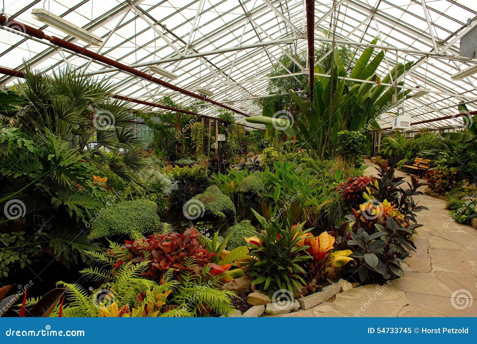 Plantas ex ticas na estufa imagem de stock imagem de for Plantas de interior exoticas