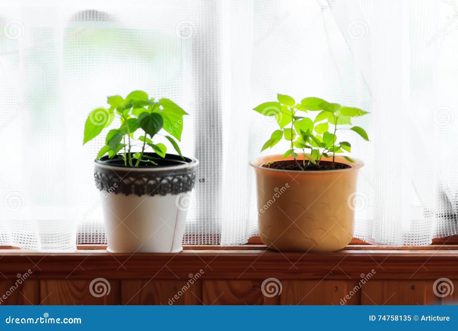 Plantas home