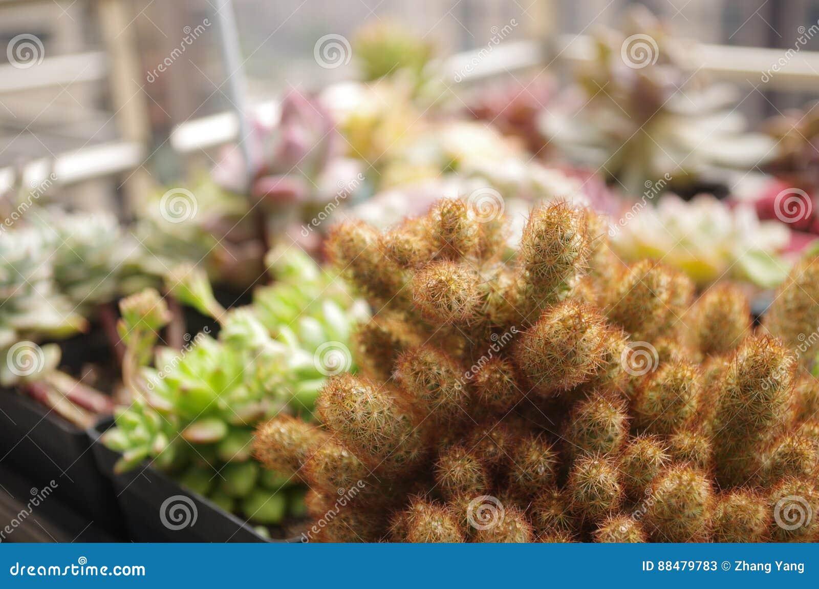 Plantas Meaty da planta carnuda do ¼ Œ do succulentï do ¼ Œ do plantï