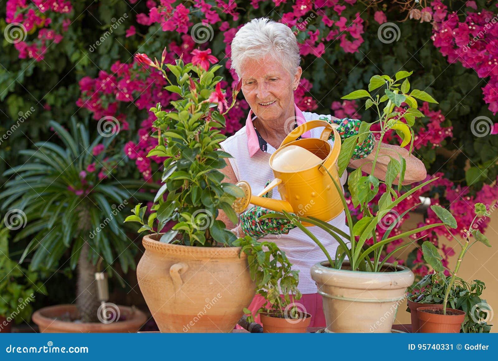 Plantas molhando do jardineiro ativo do aposentado