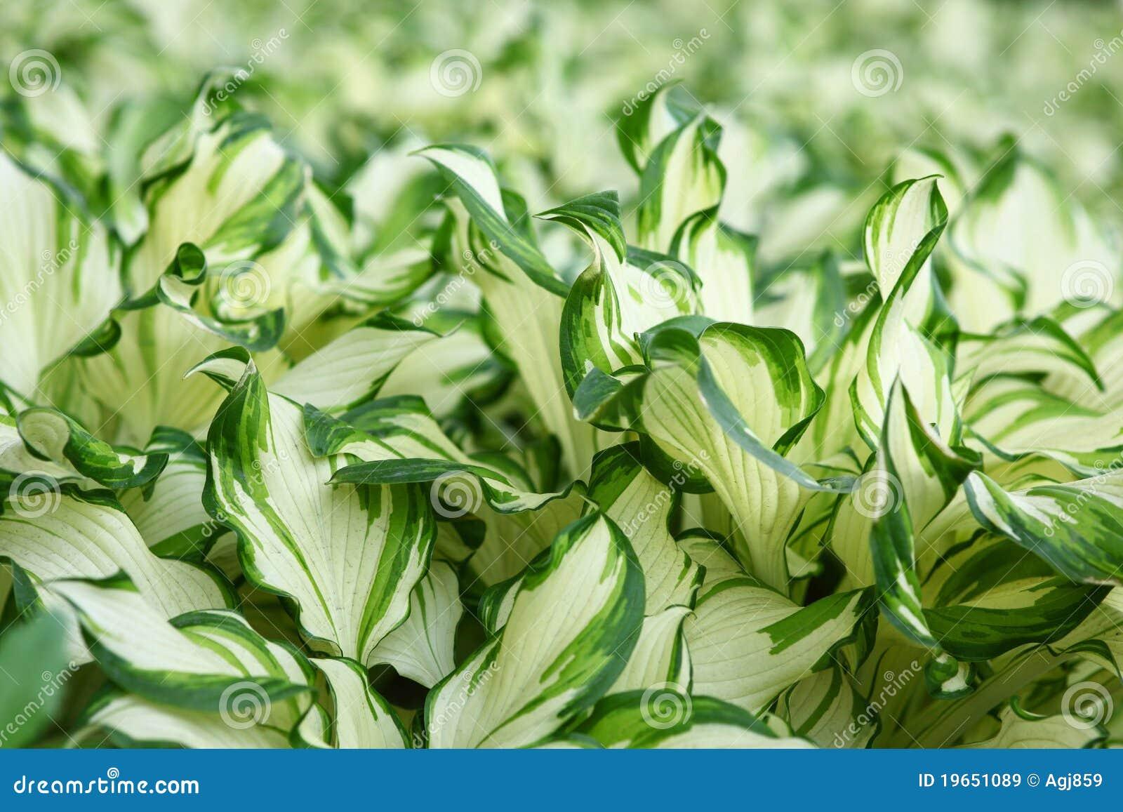 plantas jardim fotos : plantas jardim fotos:Plantas Na Borda Do Verde Do Jardim Imagens de Stock Royalty Free