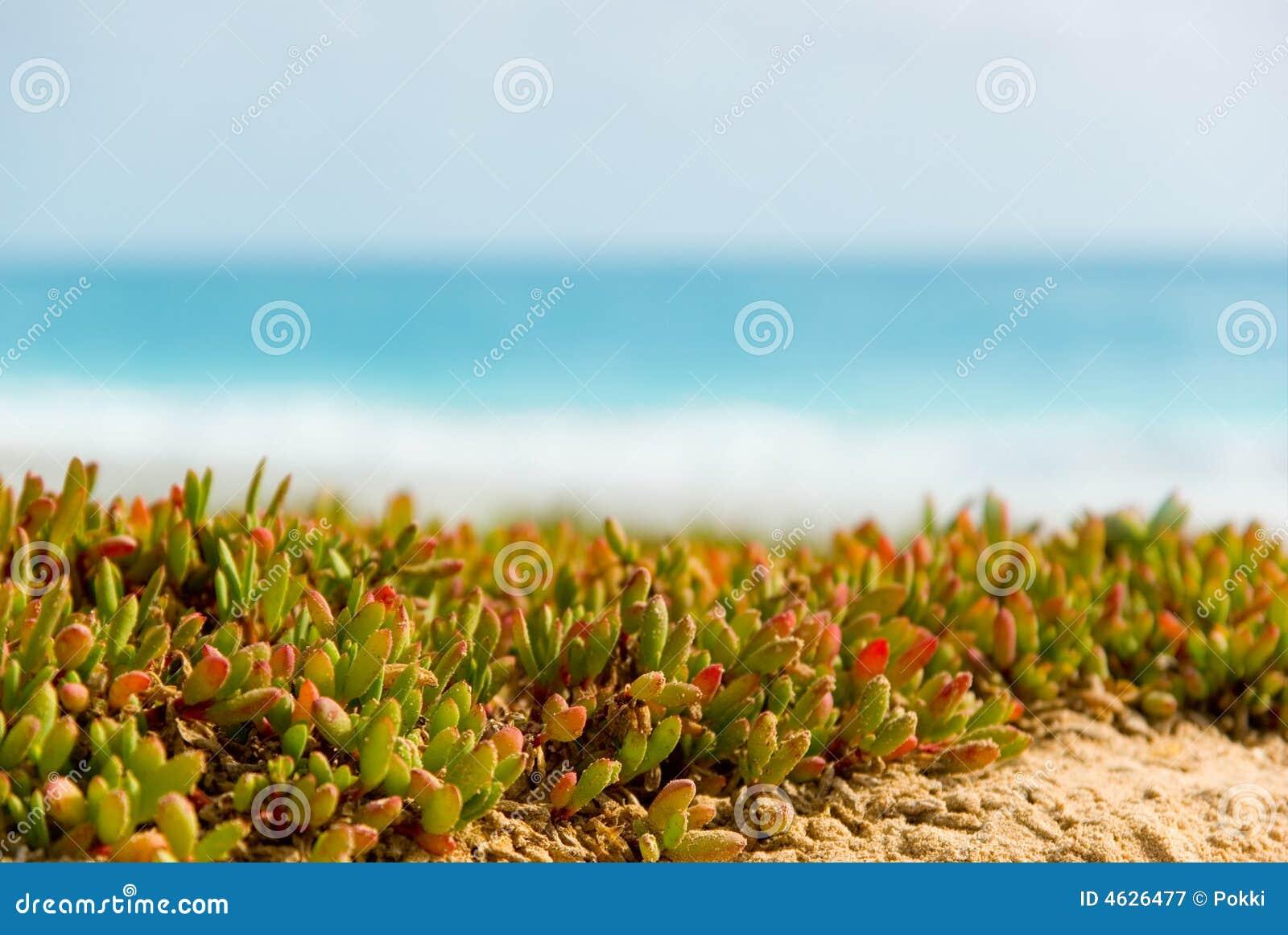 Plantas na praia.