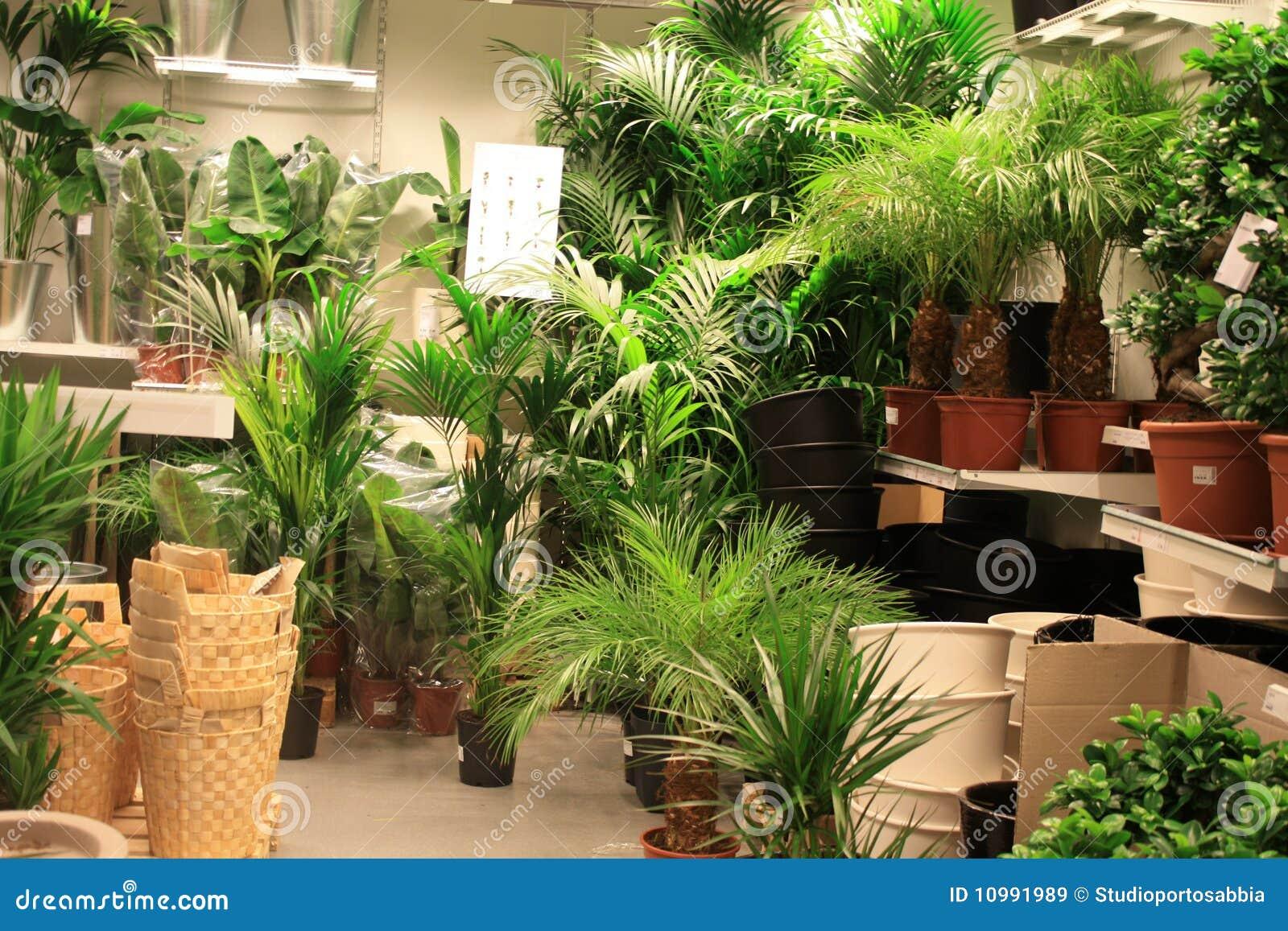 Plantas No Centro De Jardim Imagens de Stock Royalty Free  Imagem