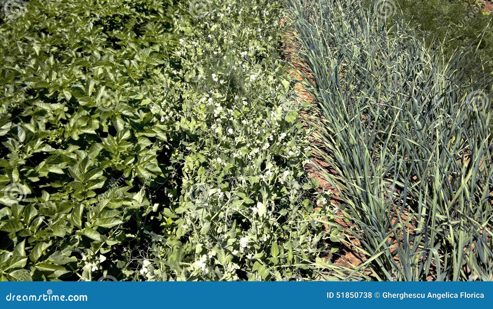 plantas jardim fotos : plantas jardim fotos:Plantas No Jardim Foto de Stock – Imagem: 51850738