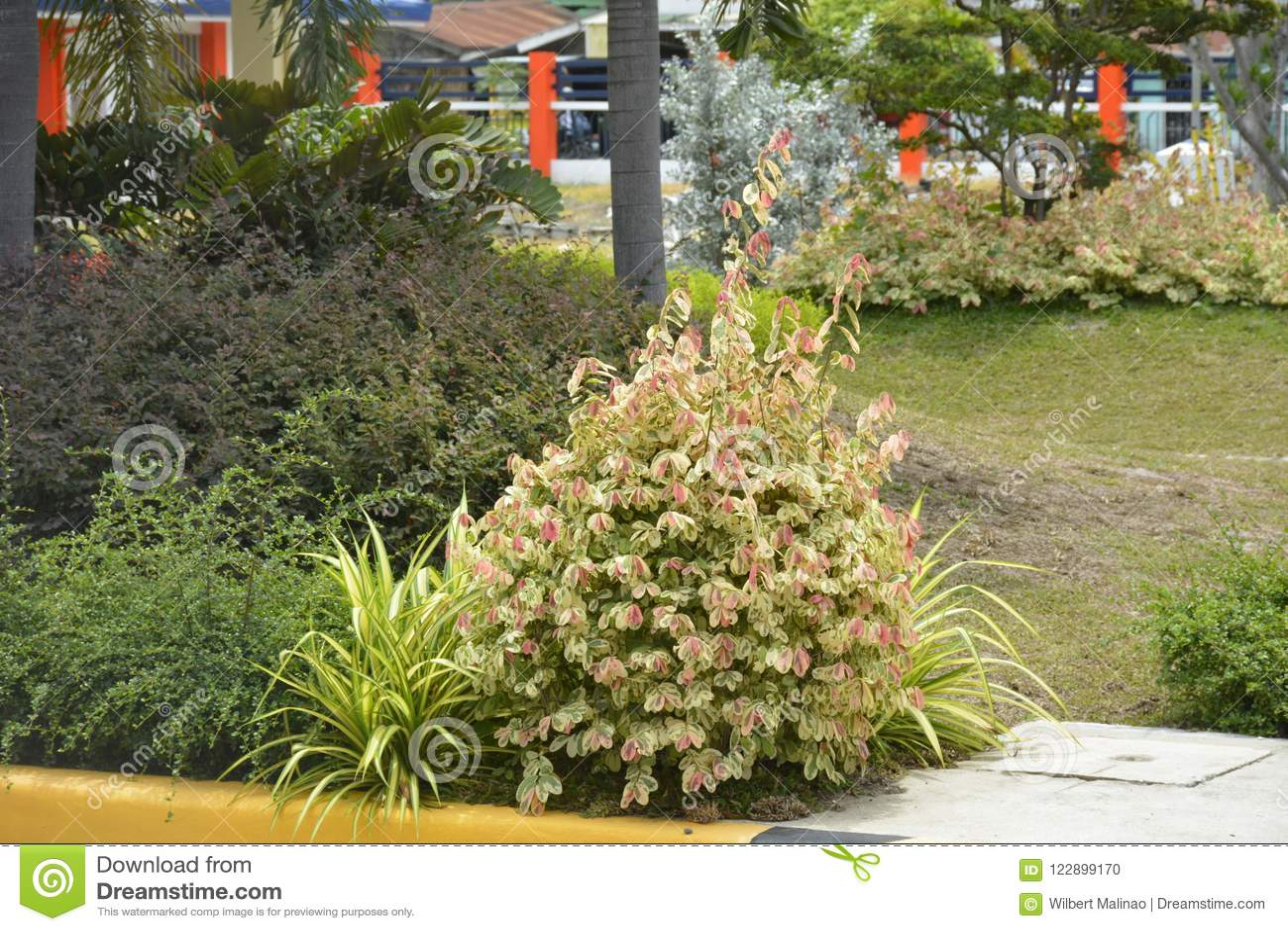 Plantas nos locais do escritório de DPWH, cidade de Digos, Davao del Sur, Filipinas
