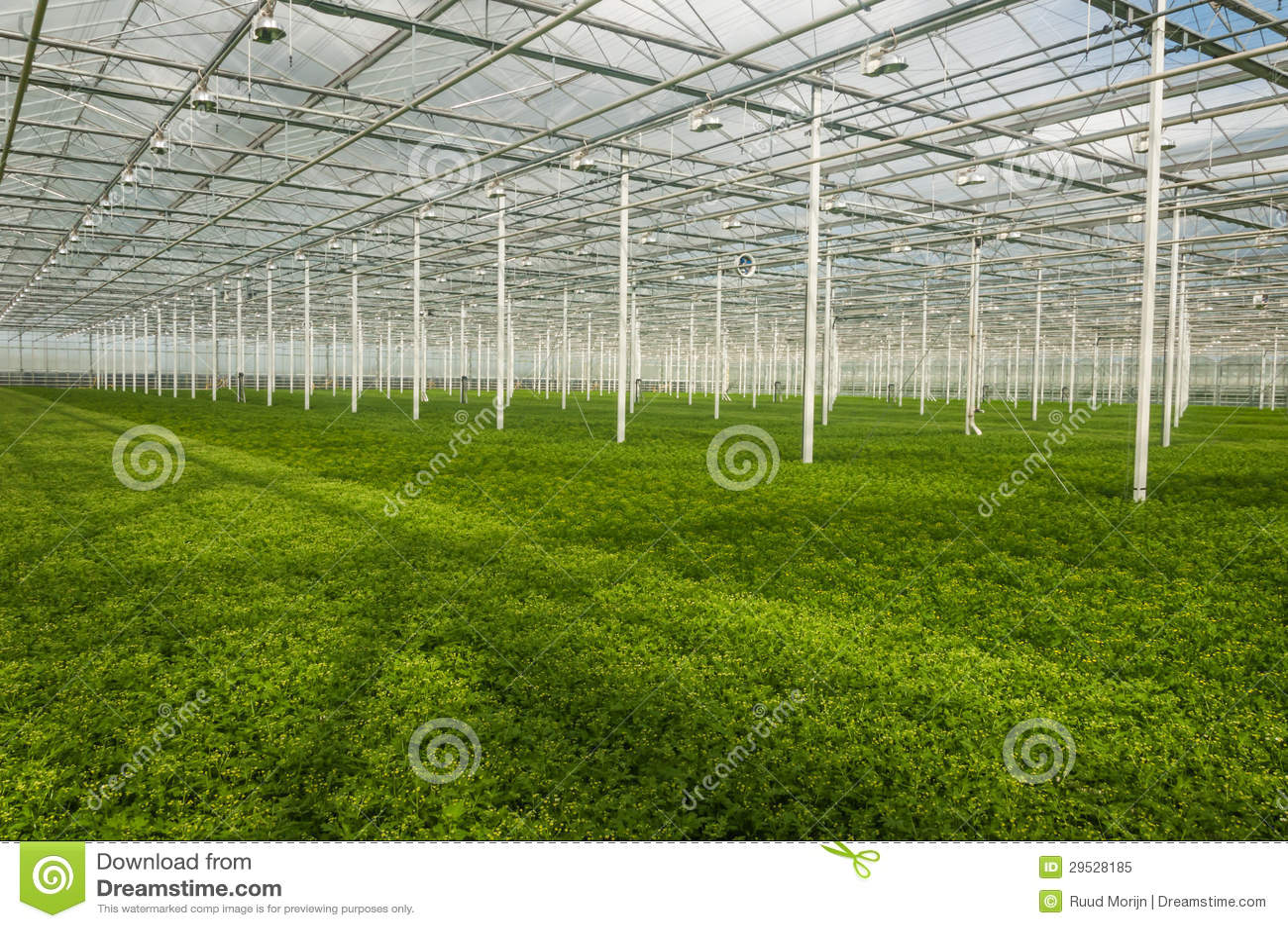 Plantas novas que crescem em um berçário muito grande da planta no inferior