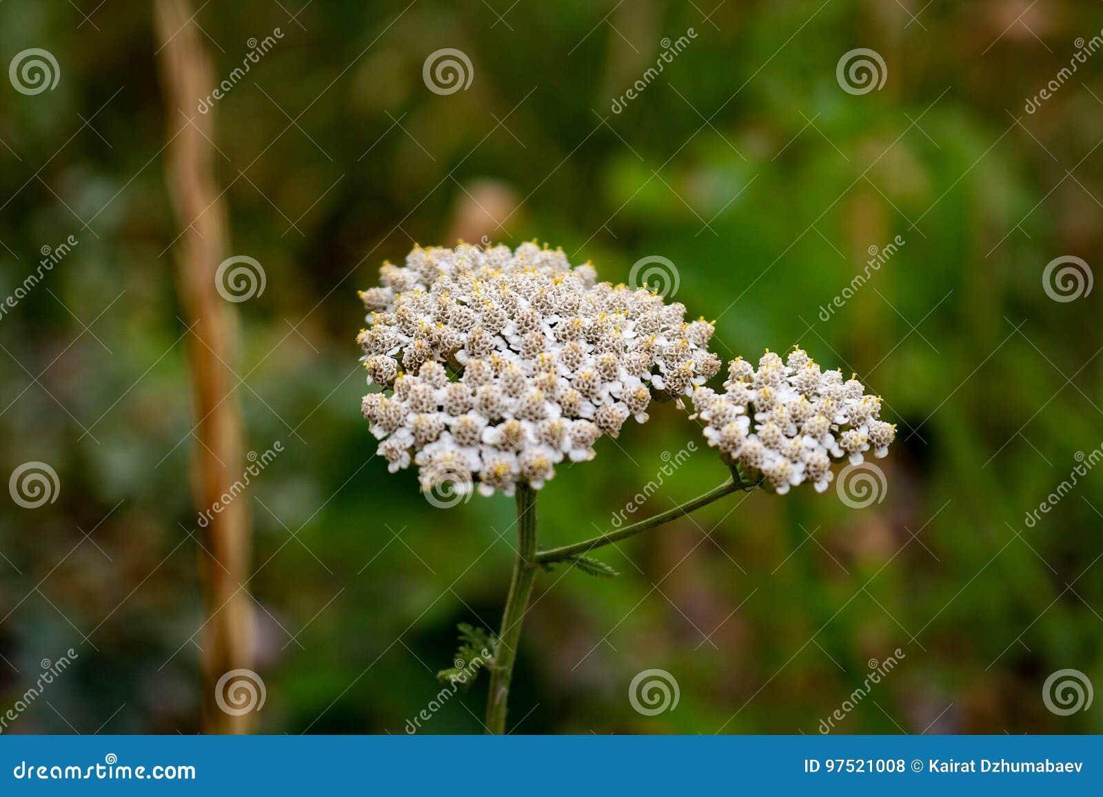 ¿Plantas o flor?