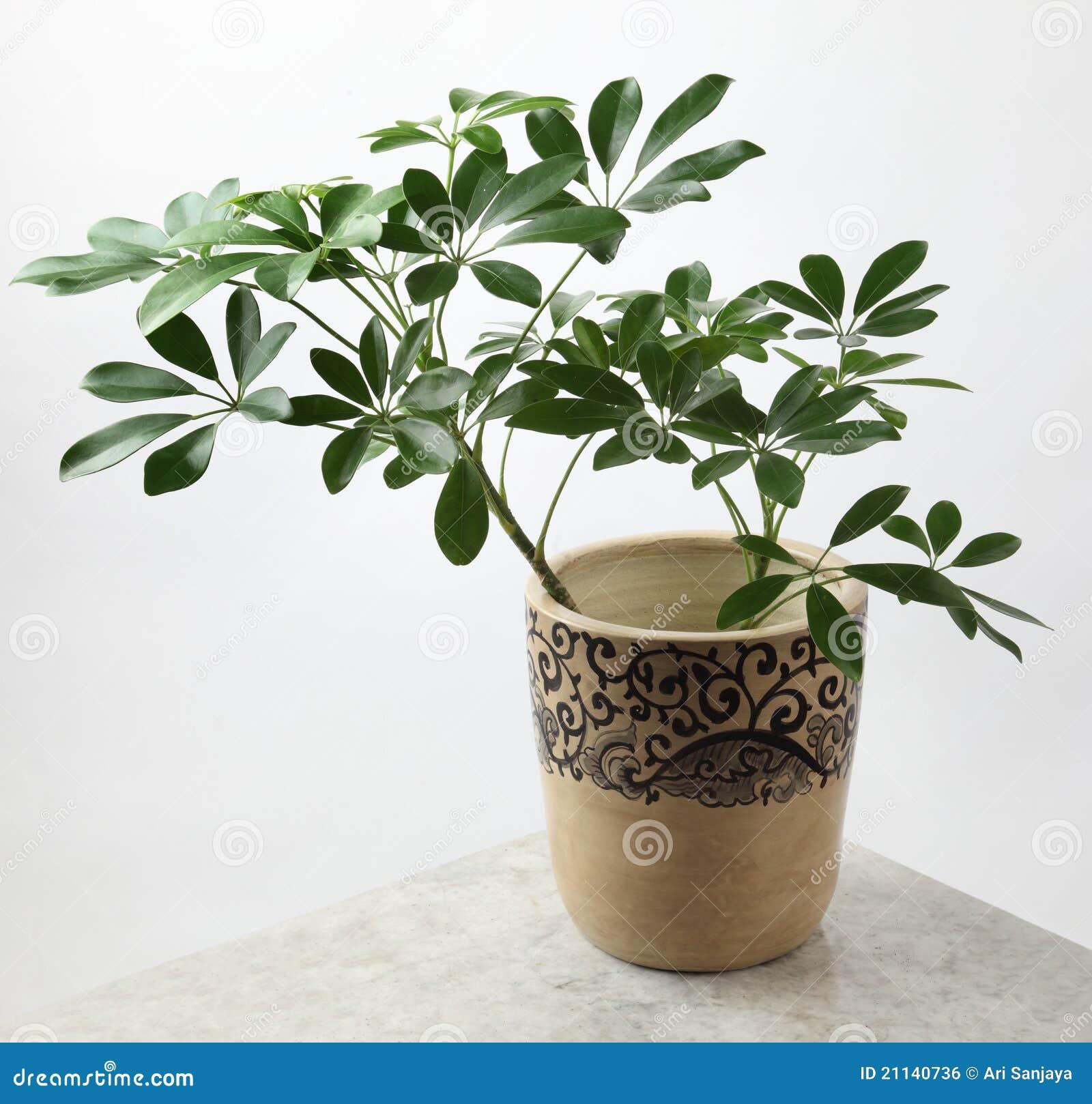 Plantas ornamentales imagen de archivo libre de regal as for 2 plantas ornamentales