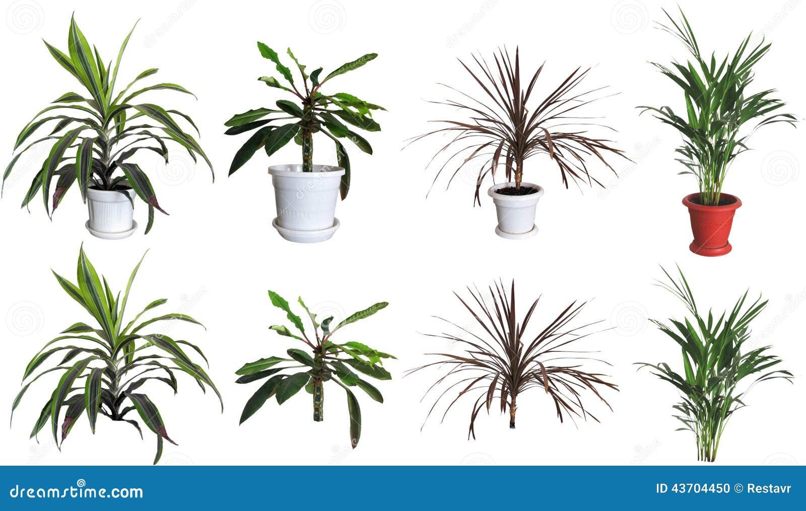 Plantas ornamentales stock de ilustraci n imagen 43704450 for Diseno de plantas ornamentales