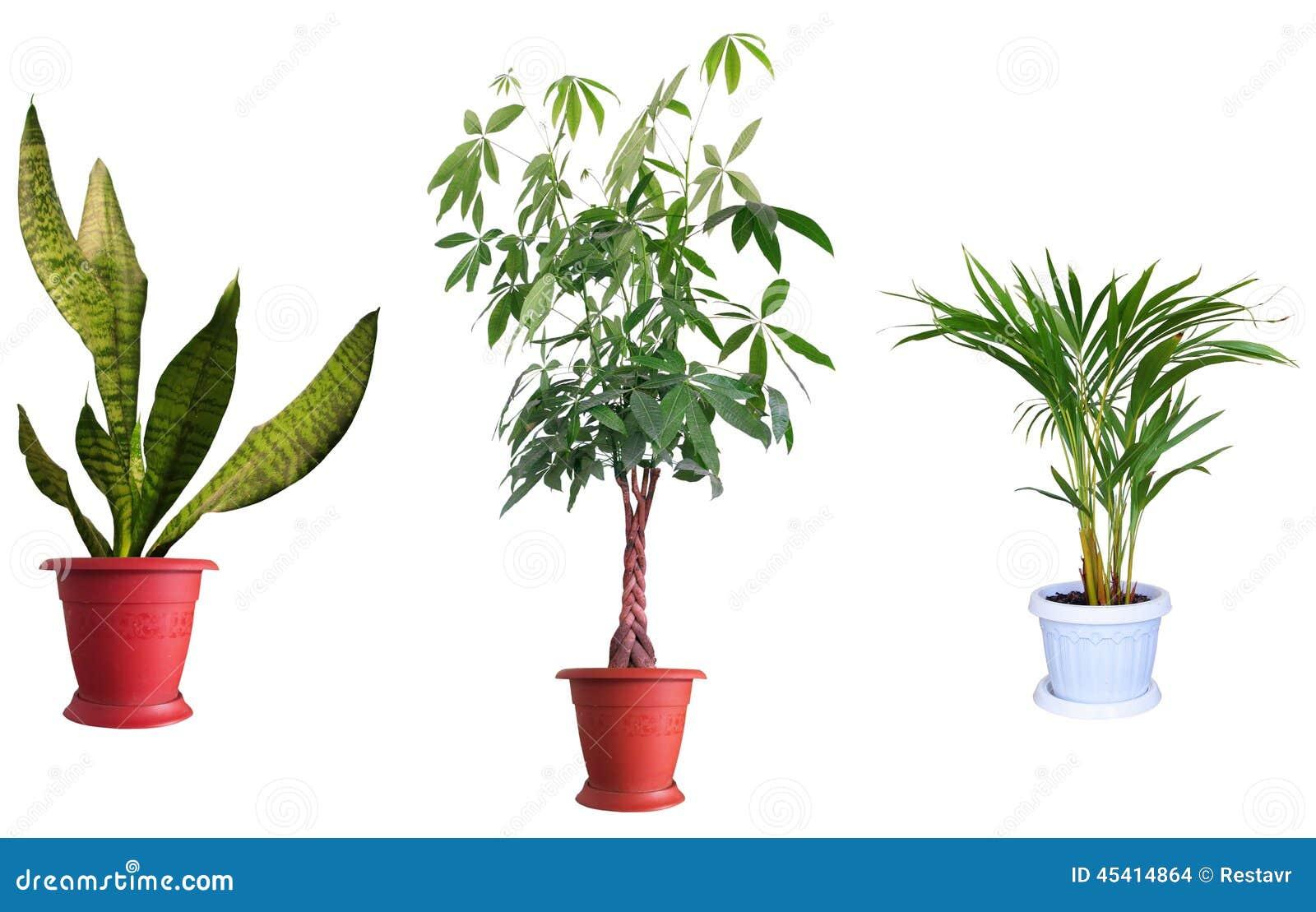 Plantas ornamentales foto de archivo imagen 45414864 for 2 plantas ornamentales