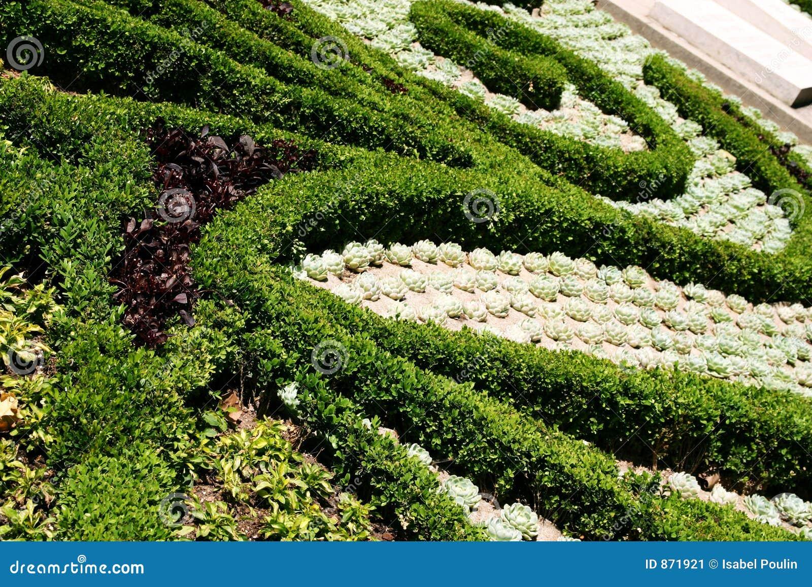 Plantas ornamentales imagen de archivo imagen 871921 for Plantas ornamentales