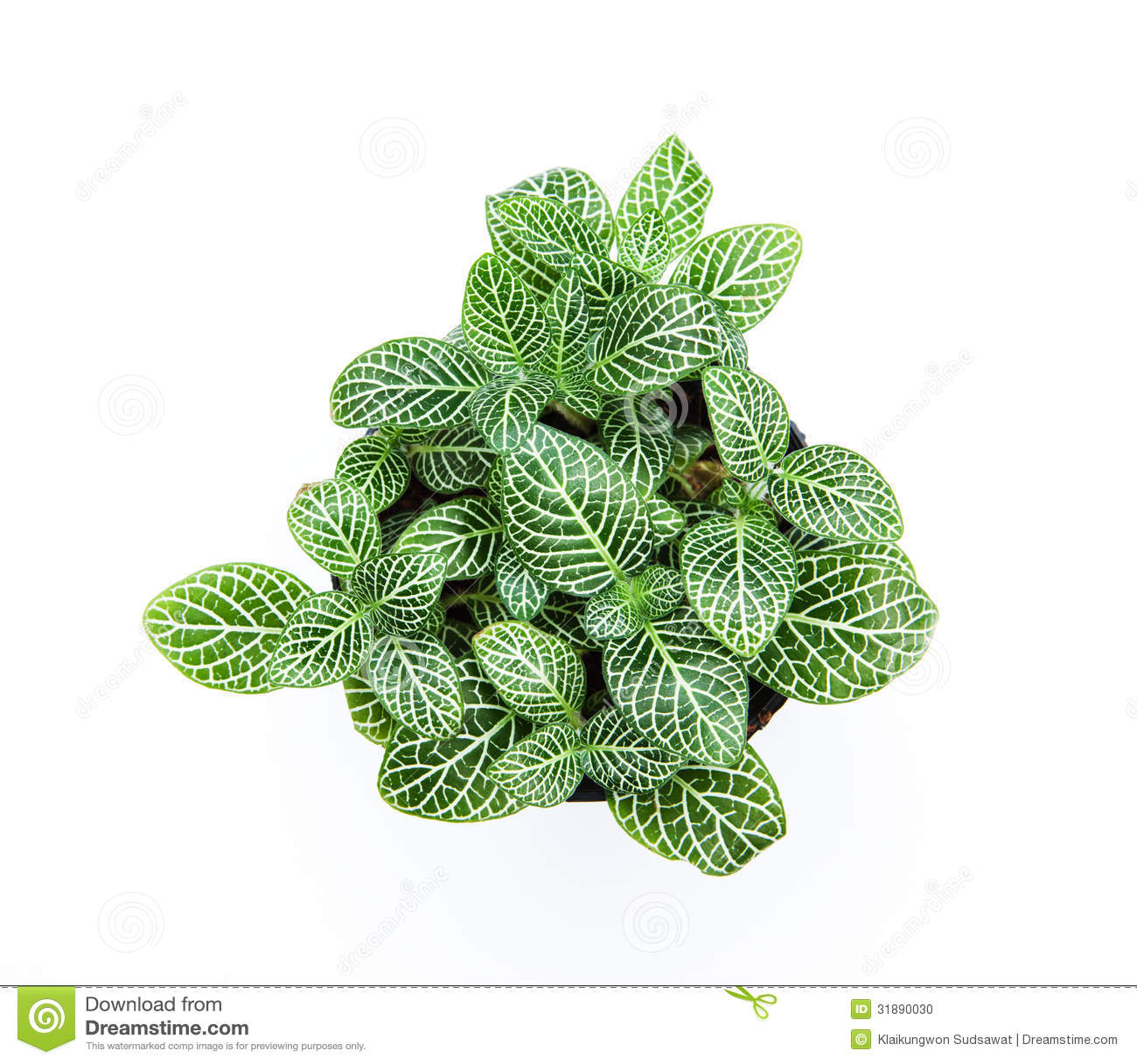 Plantas ornamentales de la hoja rayada hermosa en el fondo for 6 plantas ornamentales
