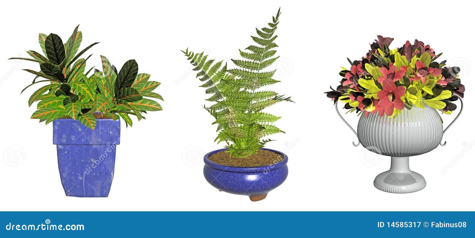 Plantas ornamentales en crisoles fotograf a de archivo for Tres plantas ornamentales