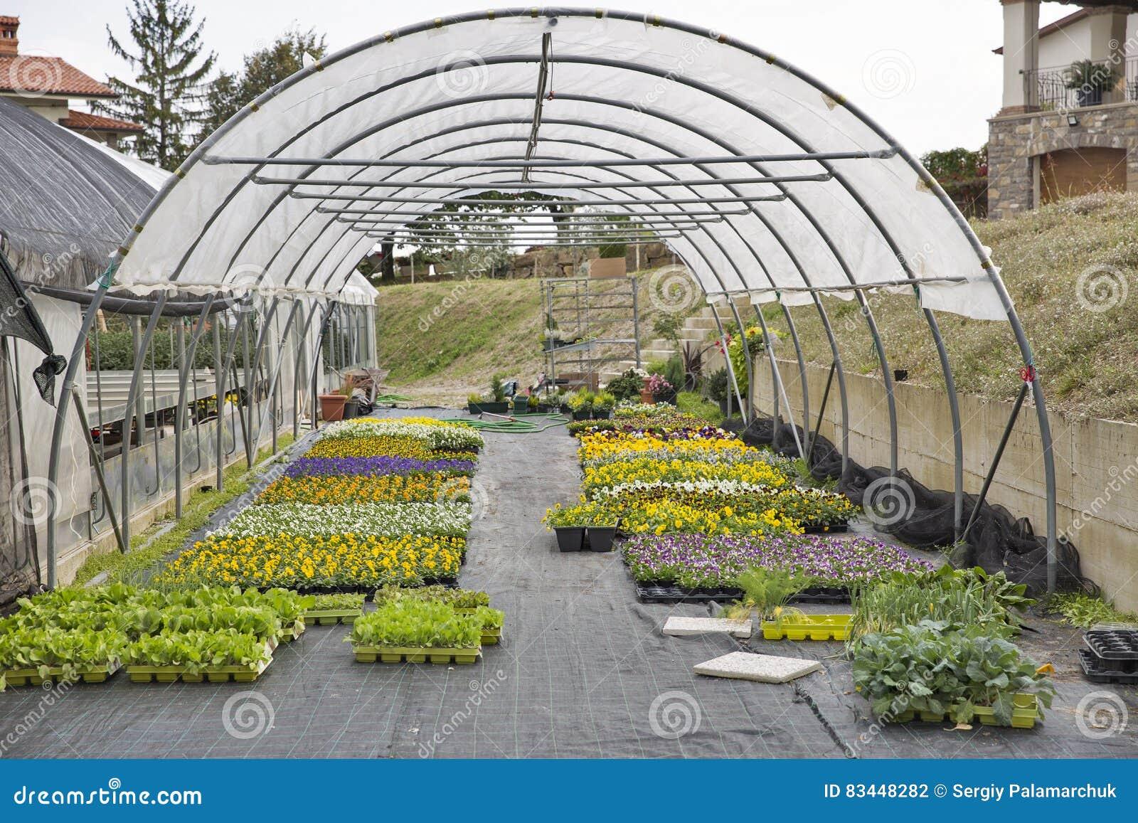Negocio de plantas ornamentales for Que son plantas ornamentales