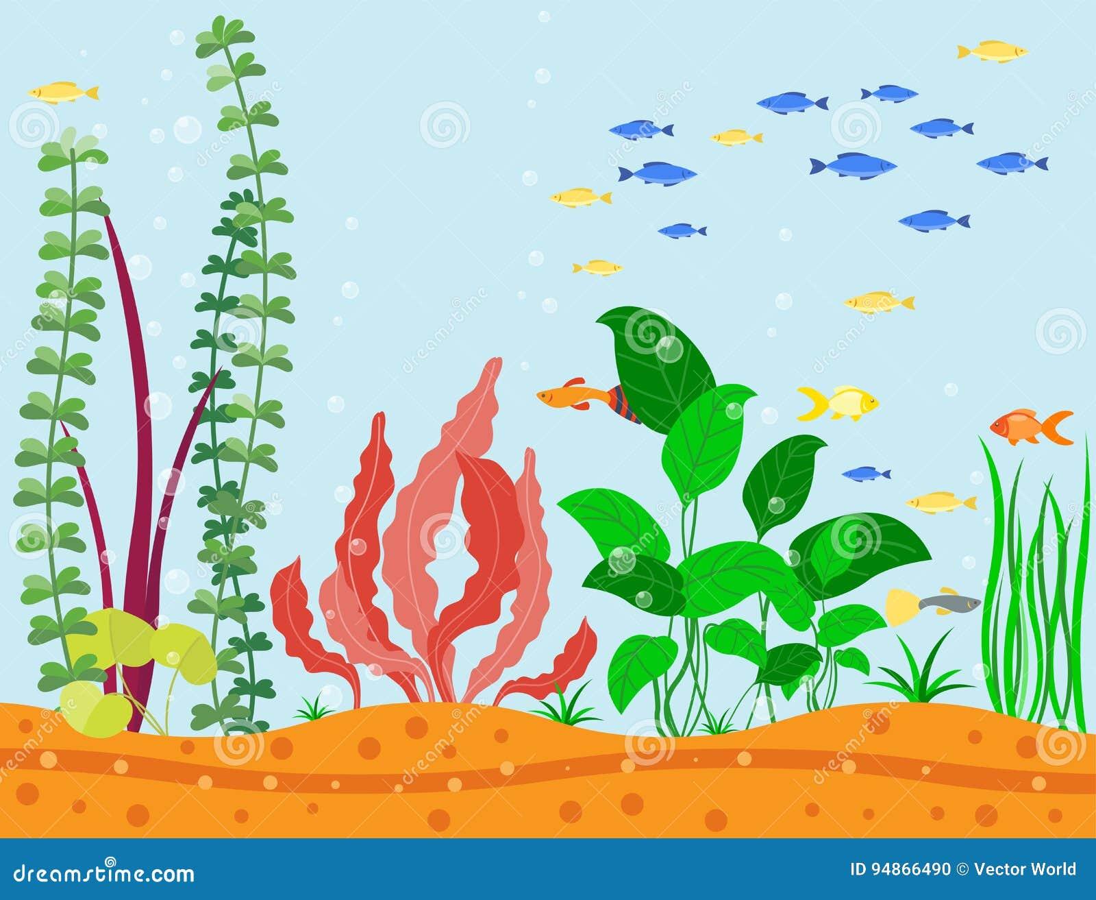 Plantas Subacuáticas De Las Algas De Los Pescados Del Acuario Del ...