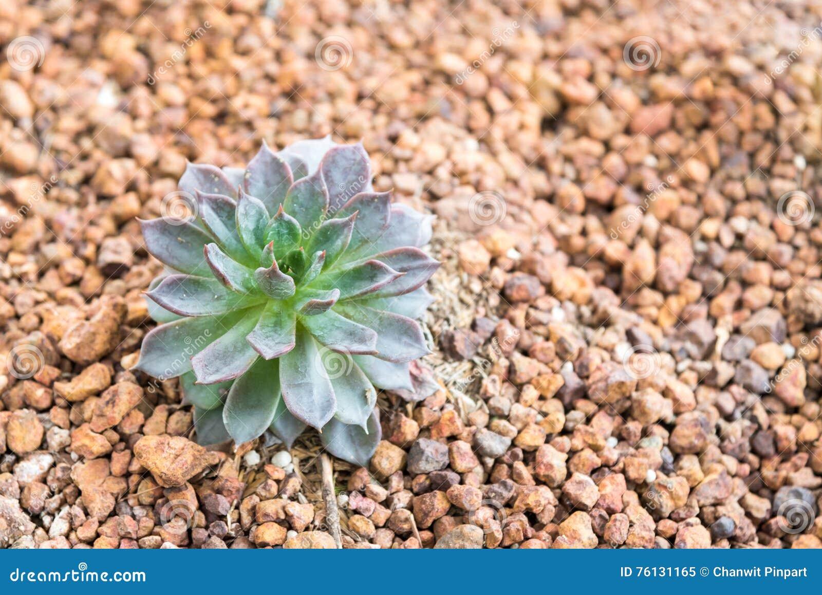 Plantas suculentas miniatura en jard n del desierto imagen for Jardin del desierto