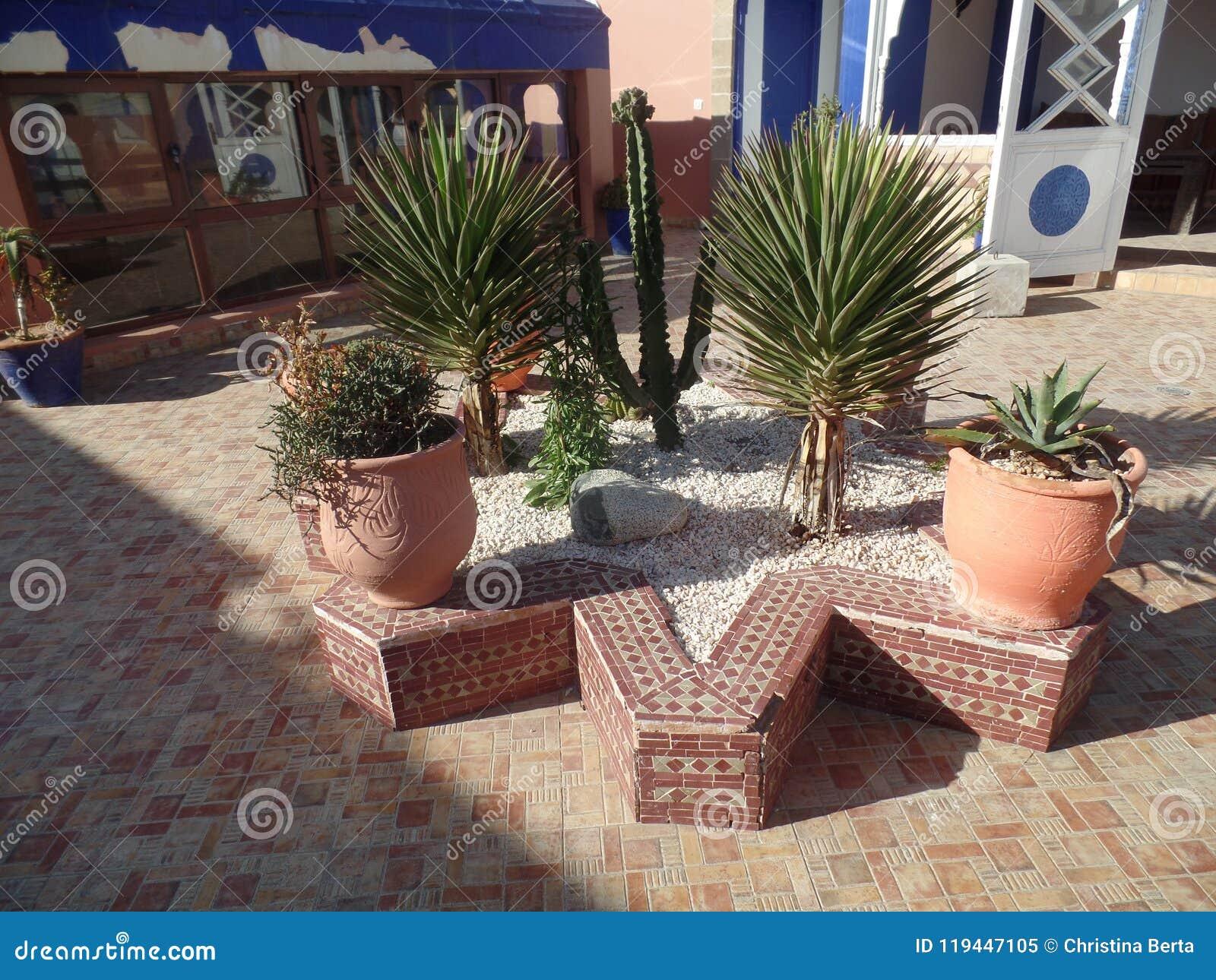Plantas tropicais em um terraço do telhado em Essaouira, Marrocos