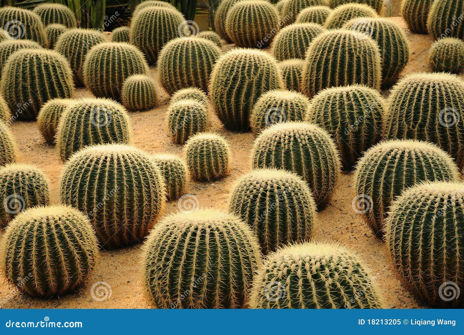 Plantas tropicales imagen de archivo imagen de fondo 18213205 - Plantas de interior tropicales ...