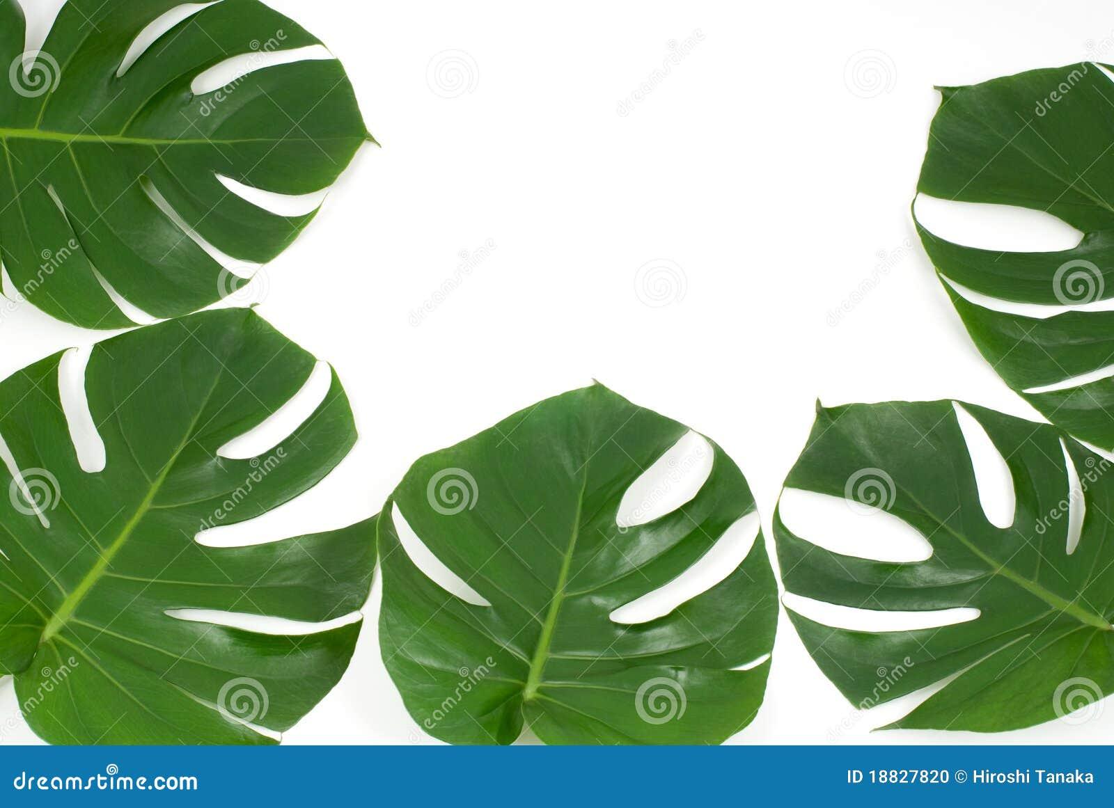 Plantas tropicales foto de archivo imagen de blanco 18827820 - Plantas de interior tropicales ...