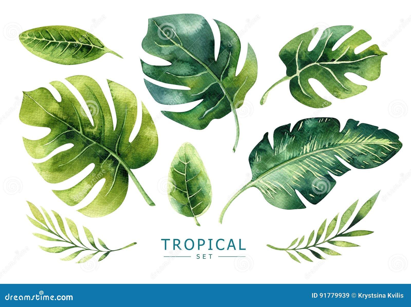 Plantas tropicales dibujadas mano de la acuarela fijadas Hojas de palma exóticas, j