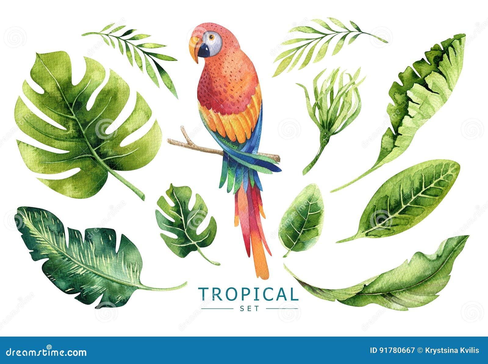 Plantas tropicales dibujadas mano de la acuarela fijadas y loro PA exótico