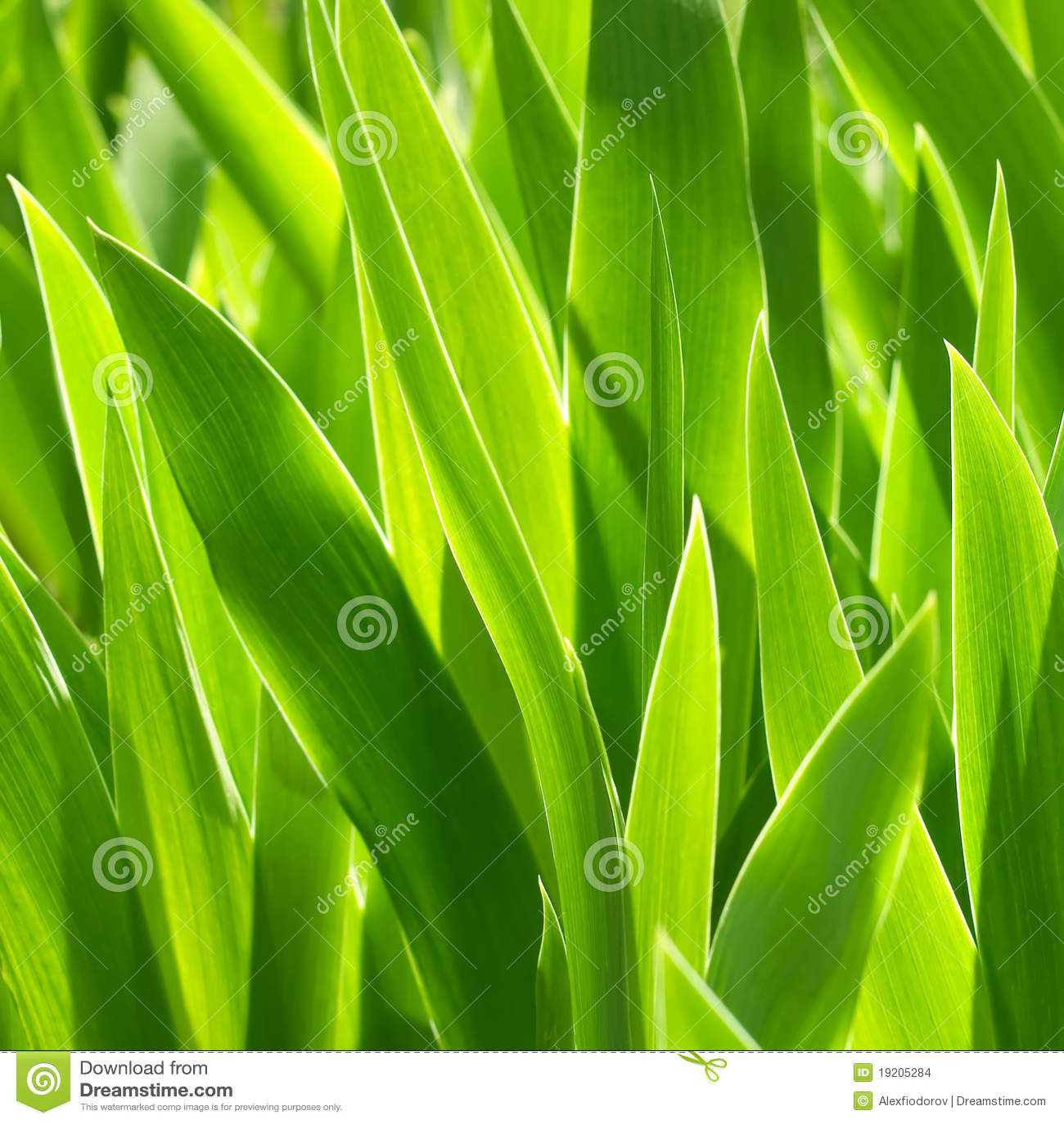 Plantas verdes.