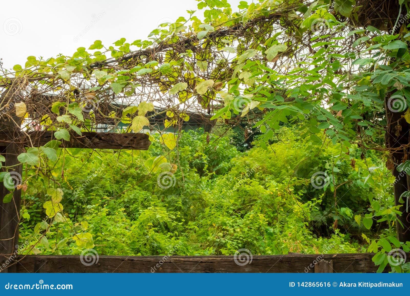 Plantas verdes con el marco de madera y de la hiedra