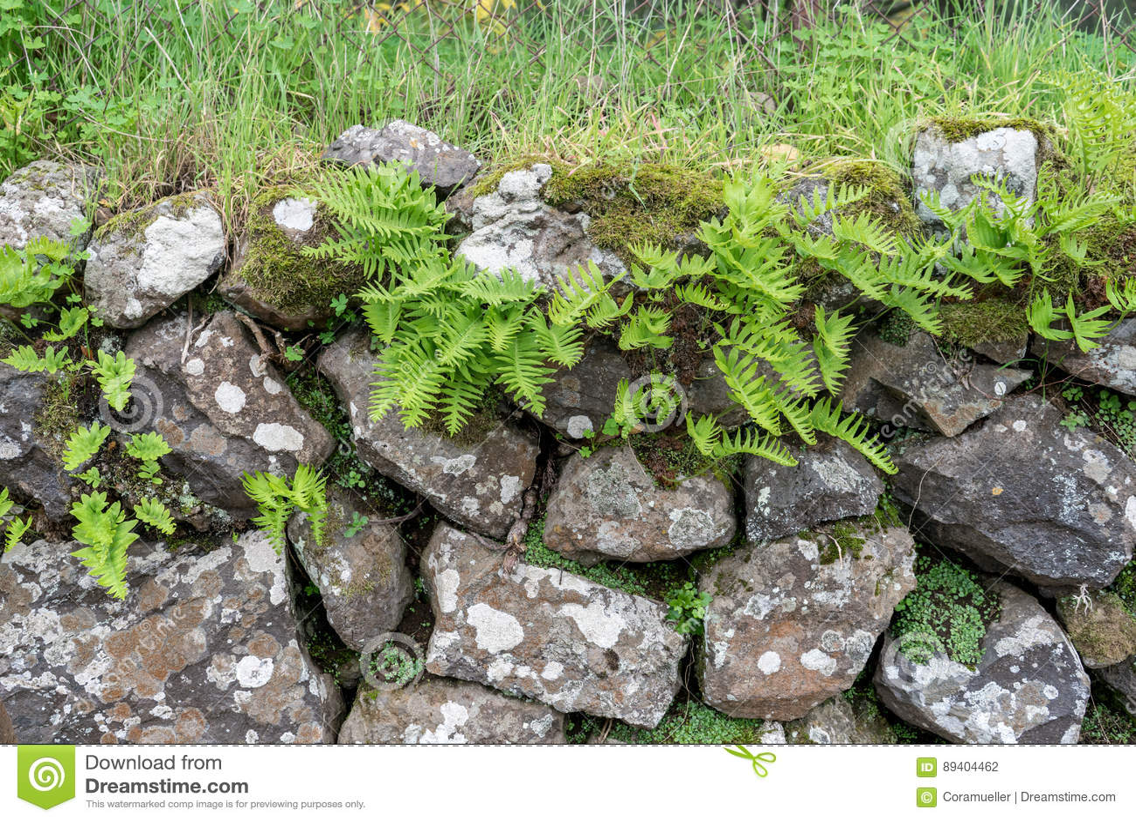 Plantas verdes da samambaia