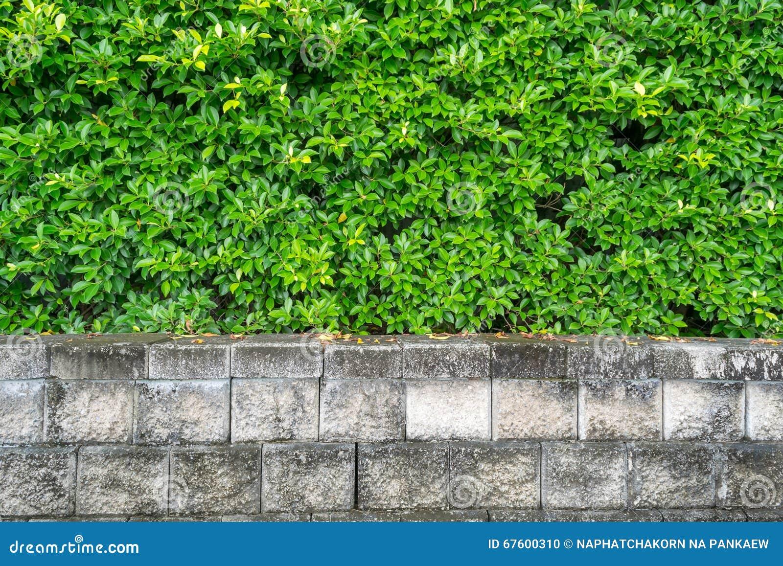 Plantas verdes del jard n para el fondo de la pared foto - Plantas para estanques de jardin ...