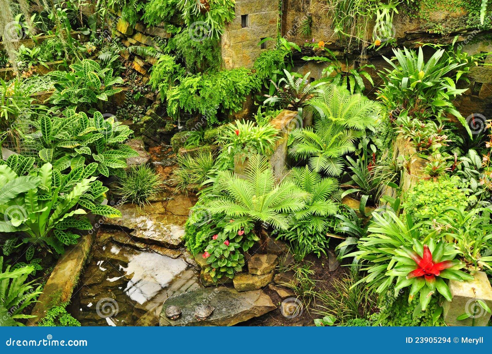 Imagens de Stock Plantas verdes do jardim tropical