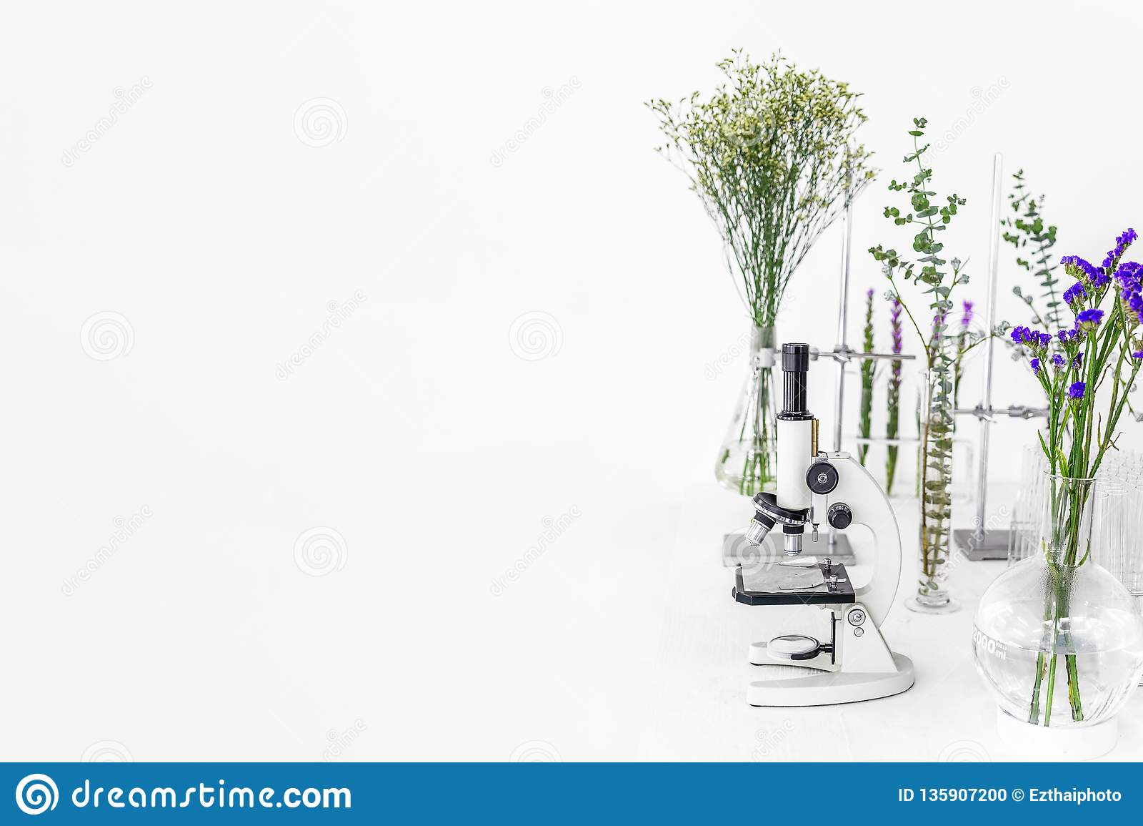 Plantas verdes e equipamento científico na biologia laborotary Microscópio com tubos de ensaio/recipientes de vidro e braçadeira