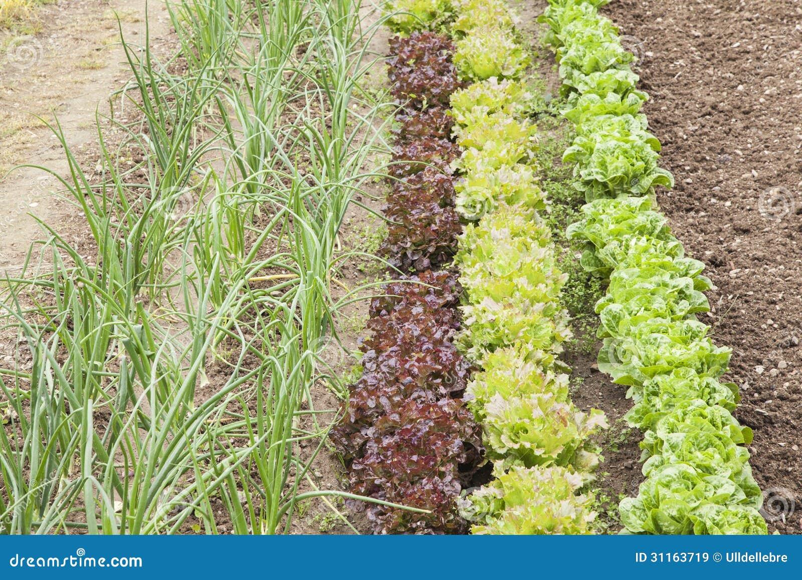 Plantas Verdes Em Um Jardim Vegetal Imagens de Stock Royalty Free