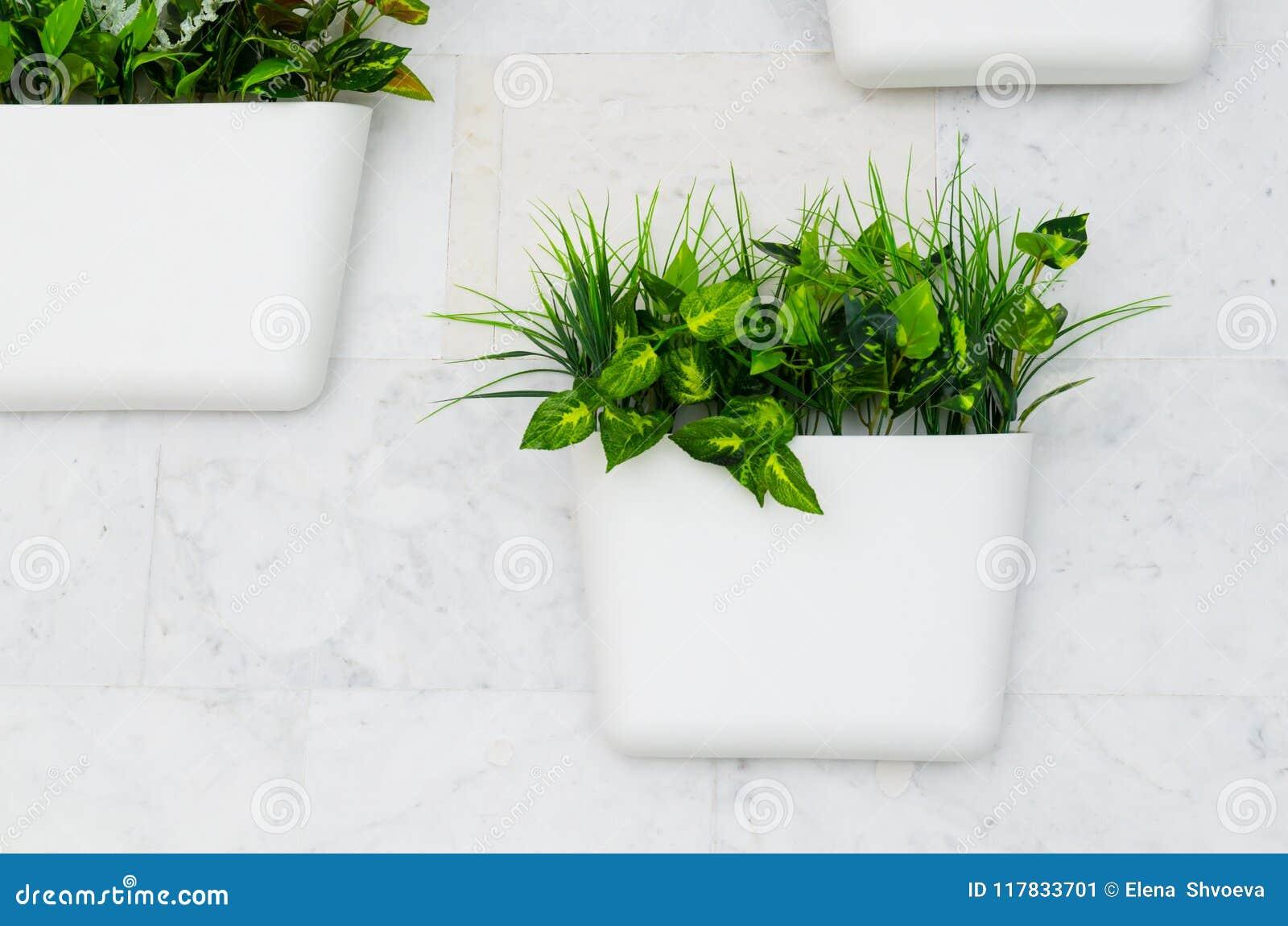 Plantas verdes en los potes blancos en la pared, el cultivar un huerto vertical en el interior
