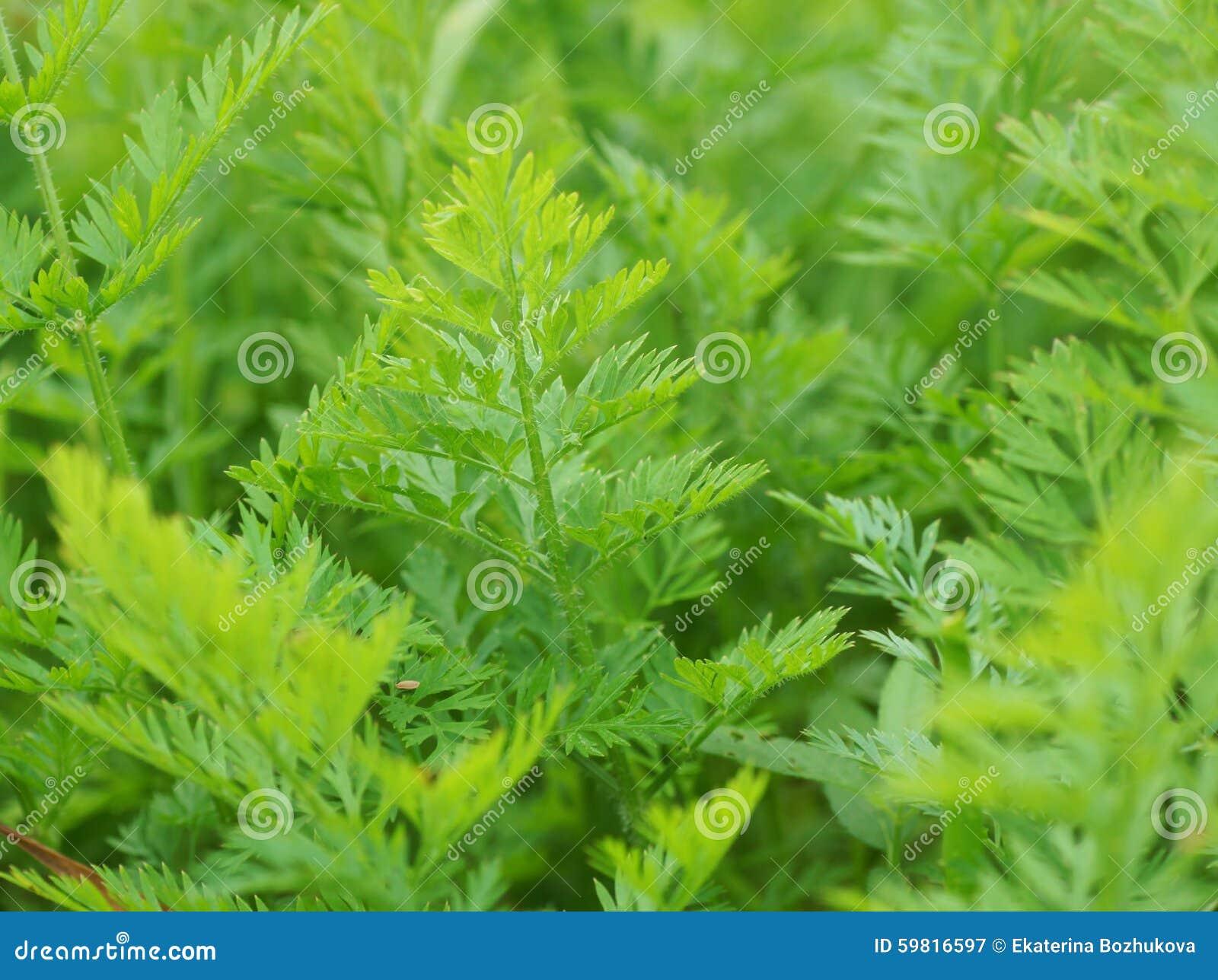 plantas verdes no jardim fim acima mr no pr no 0 11 0