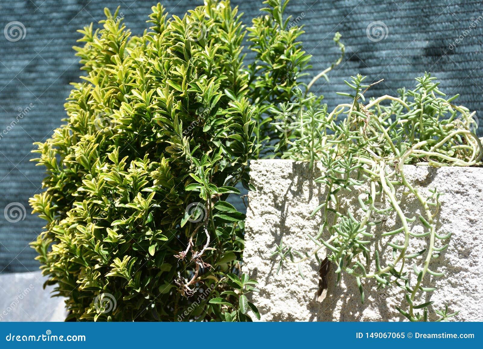 Plantas verdes no jardim
