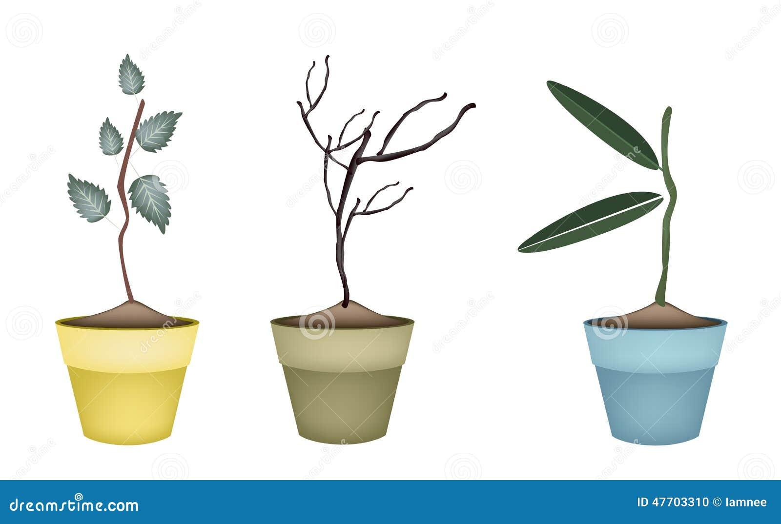 Plantas verdes y secas frescas en macetas ilustraci n del - Plantas secas decoracion ...