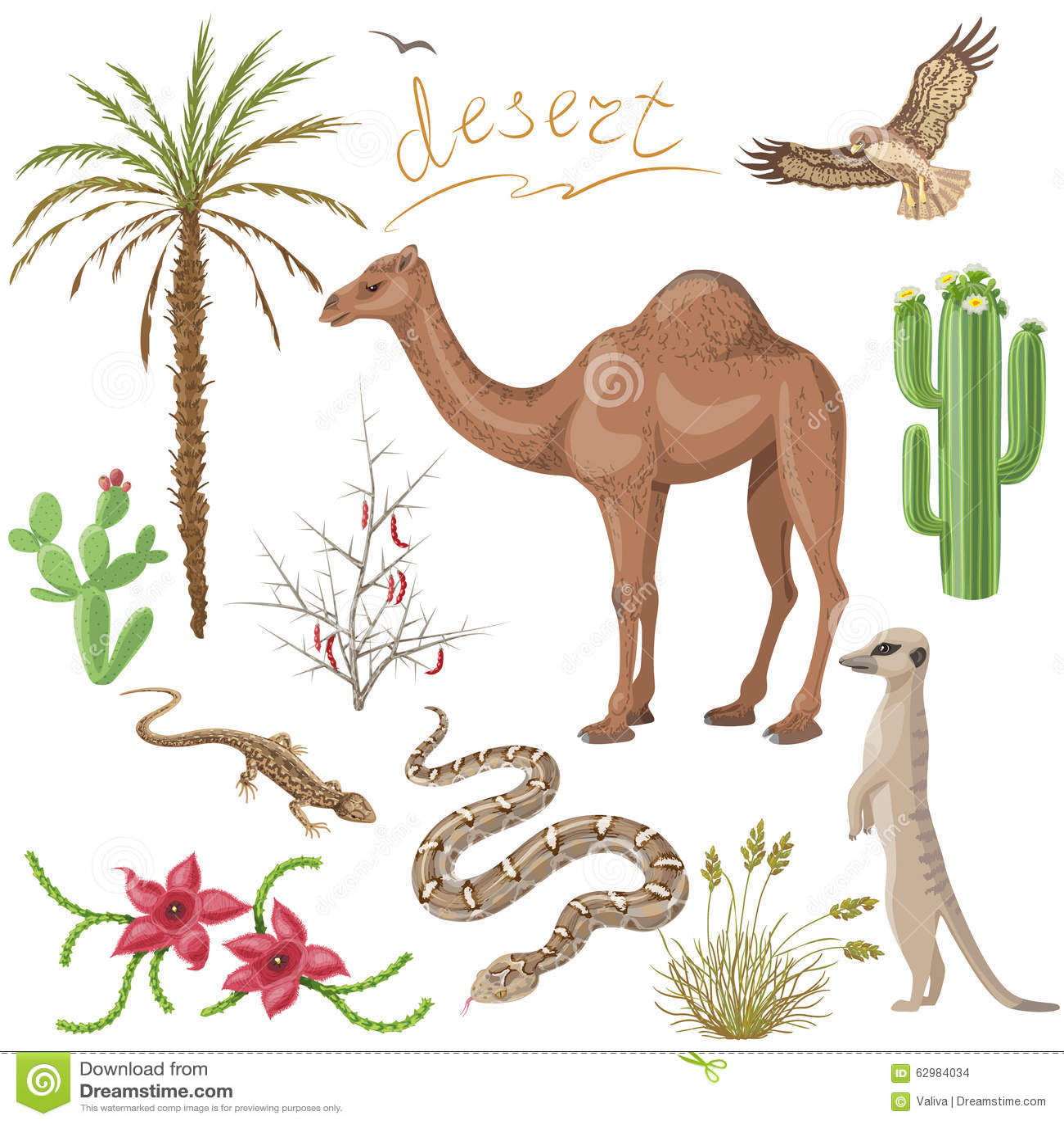 Plantas Y Animales De Desierto Fijados Ilustración del ...