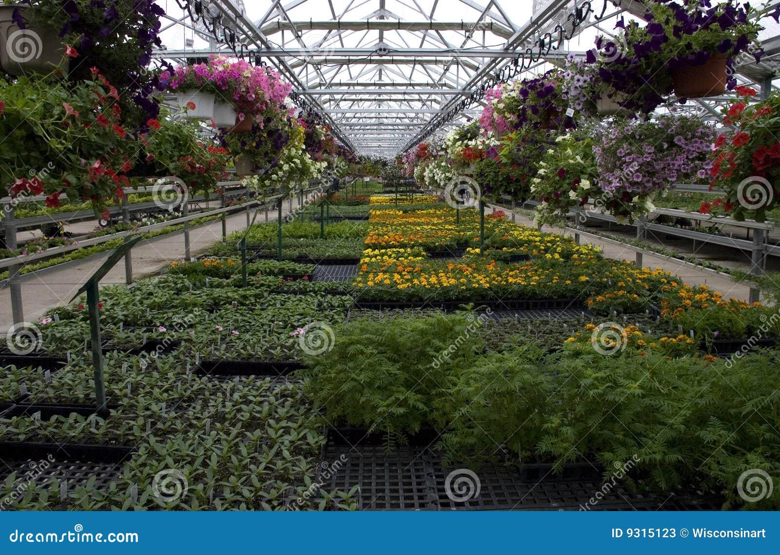 Plantas y flores de invernadero para la venta imagen de Plantas de invernadero